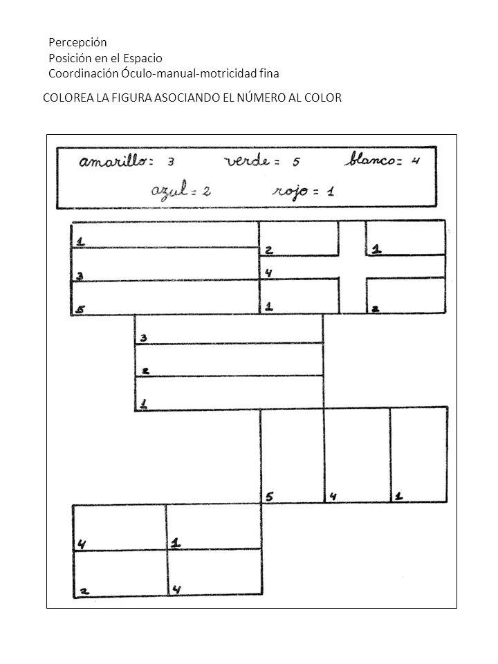 Percepción Posición en el Espacio. Coordinación Óculo-manual-motricidad fina.
