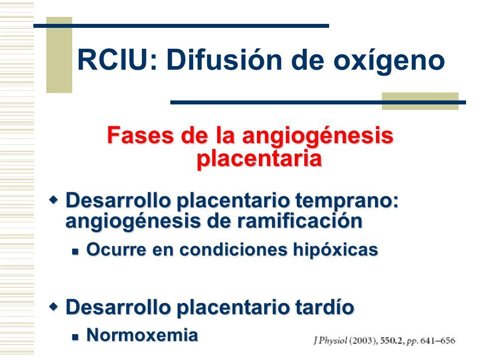 Fases de la angiogénesis placentaria