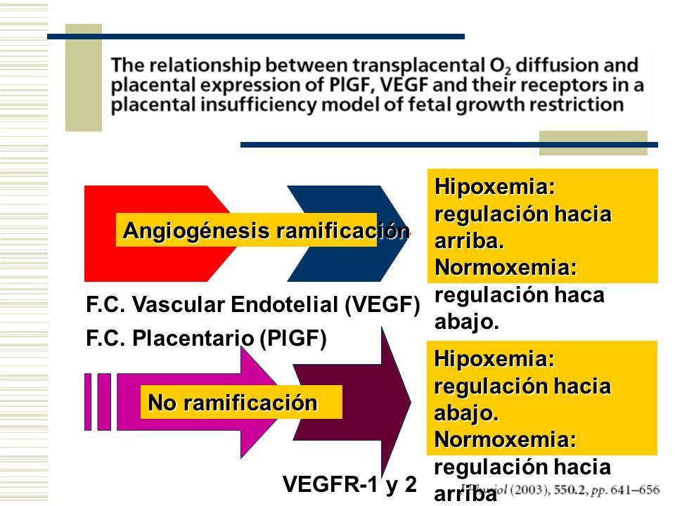 Angiogénesis ramificación