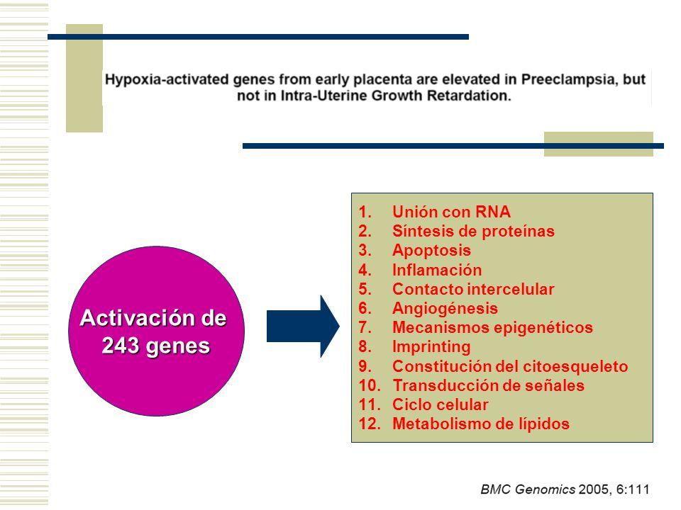 Activación de 243 genes Unión con RNA Síntesis de proteínas Apoptosis