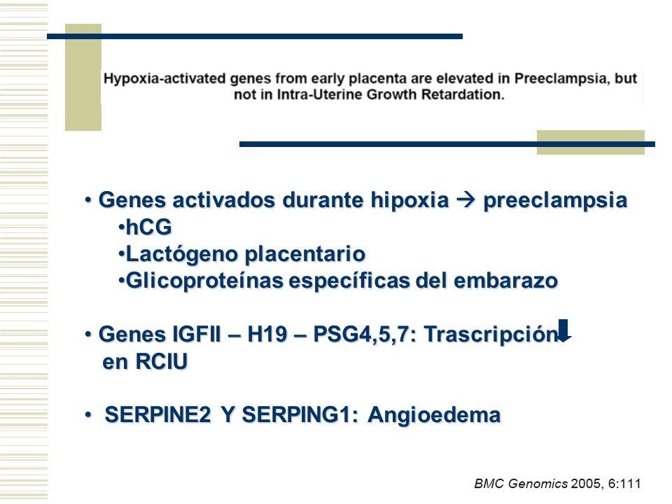 Genes activados durante hipoxia  preeclampsia hCG