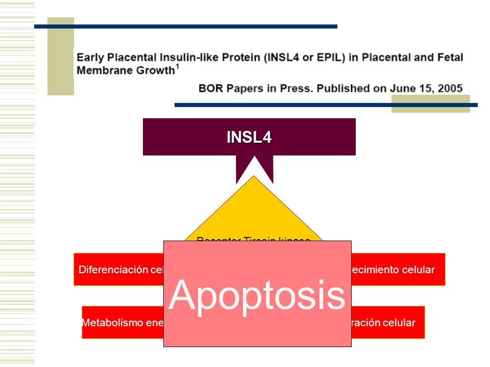 Apoptosis INSL4 Receptor Tirosin kinasa Diferenciación celular