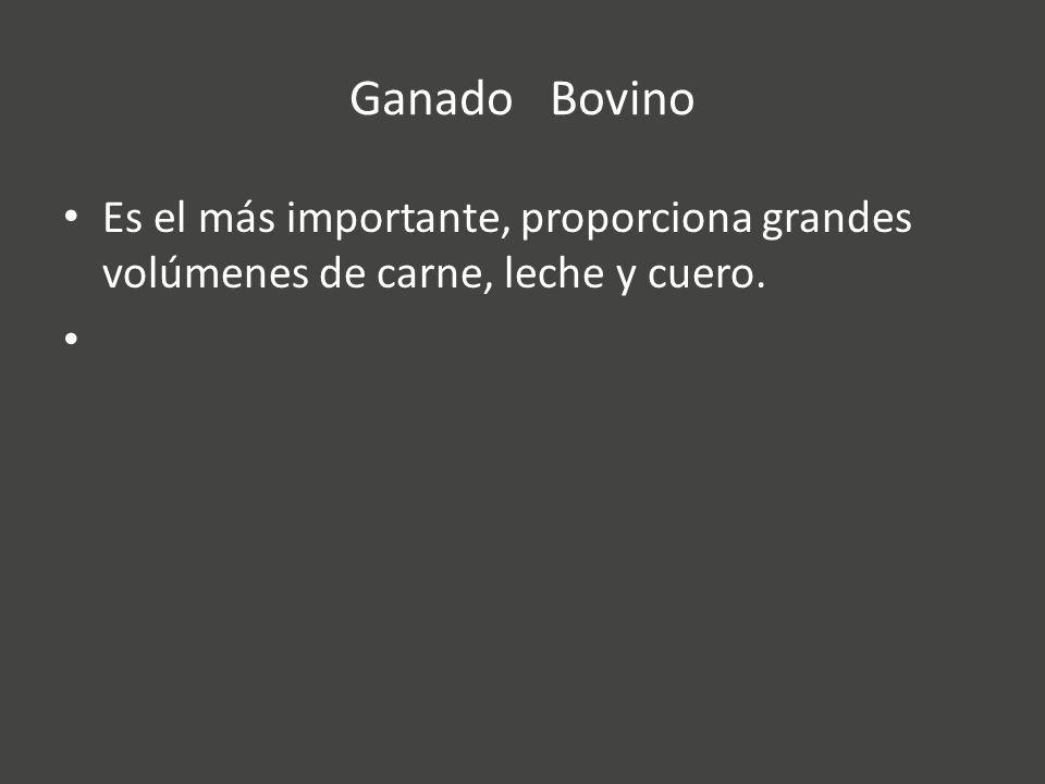 Ganado Bovino Es el más importante, proporciona grandes volúmenes de carne, leche y cuero.