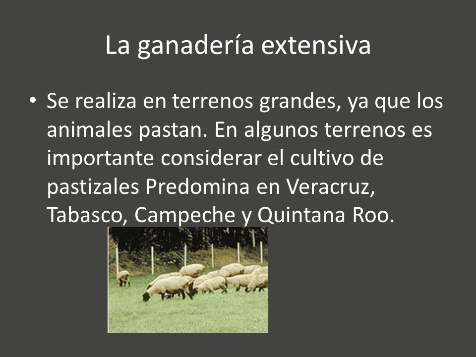 La ganadería extensiva