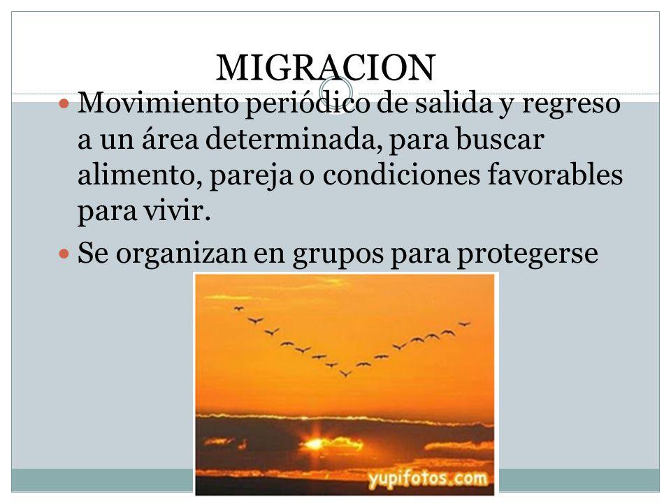 MIGRACION Movimiento periódico de salida y regreso a un área determinada, para buscar alimento, pareja o condiciones favorables para vivir.
