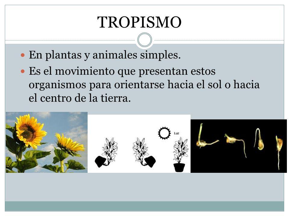 TROPISMO En plantas y animales simples.