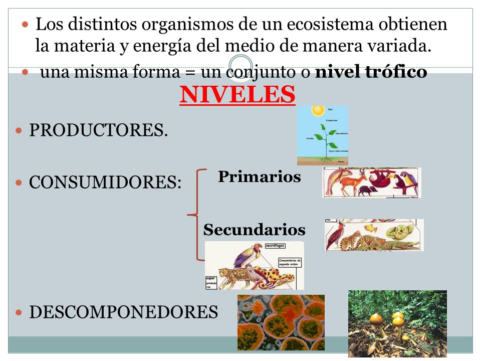 Los distintos organismos de un ecosistema obtienen la materia y energía del medio de manera variada.