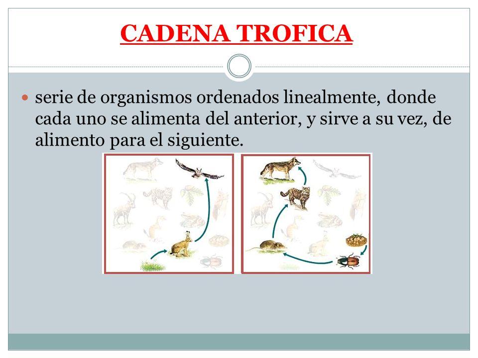 CADENA TROFICA serie de organismos ordenados linealmente, donde cada uno se alimenta del anterior, y sirve a su vez, de alimento para el siguiente.
