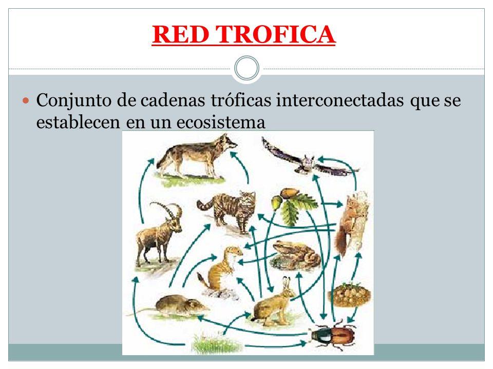 RED TROFICA Conjunto de cadenas tróficas interconectadas que se establecen en un ecosistema