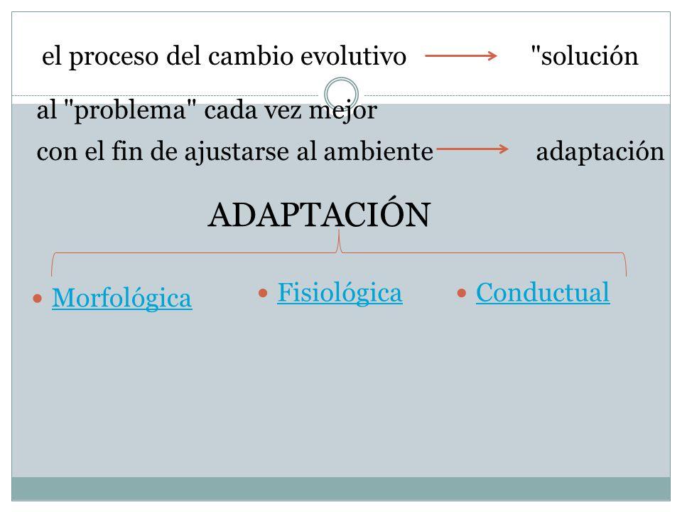 ADAPTACIÓN el proceso del cambio evolutivo solución