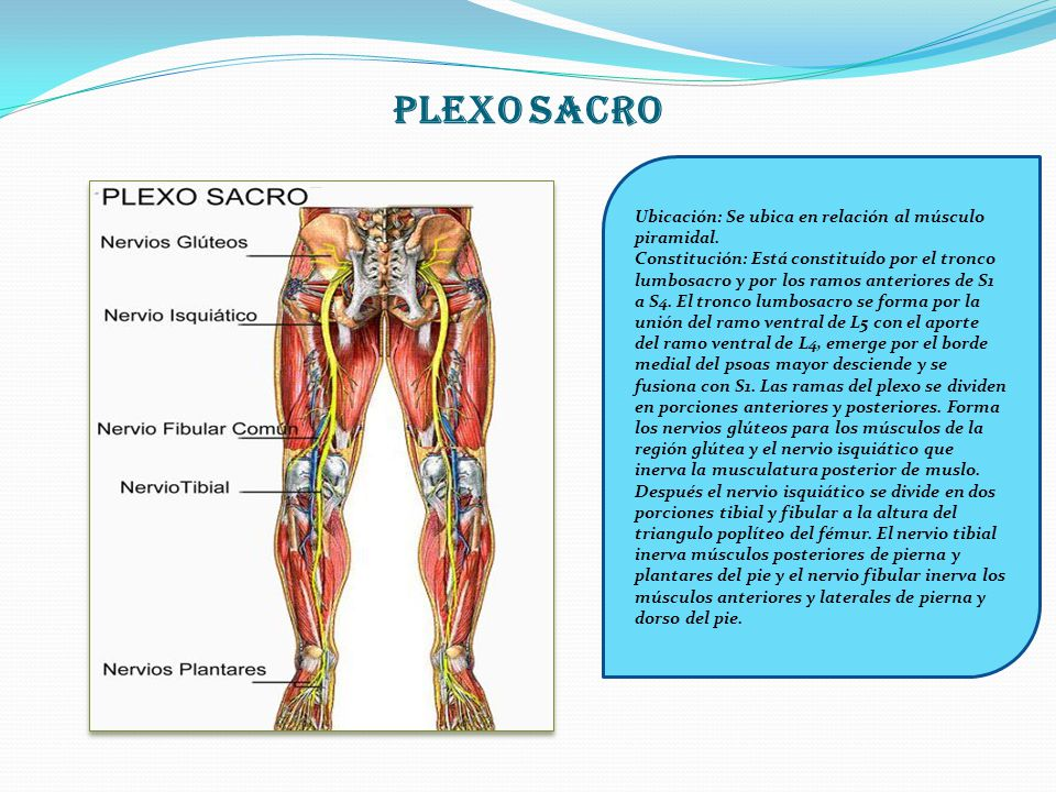 Moderno Deltoides Ubicación Regalo - Imágenes de Anatomía Humana ...