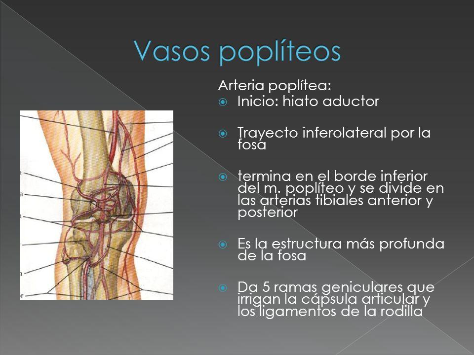 slideplayer.es/3561160/12/images/11/Vasos+popl%C3%...