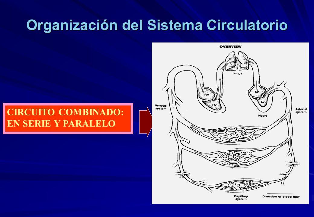 Circuito Circulatorio : Fisiologia humana sistema cardiovascular ley de starling