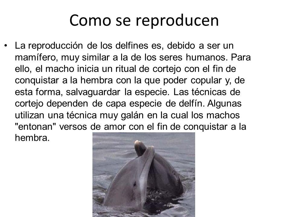 Los delfines ppt descargar - Como se aparean los elefantes ...