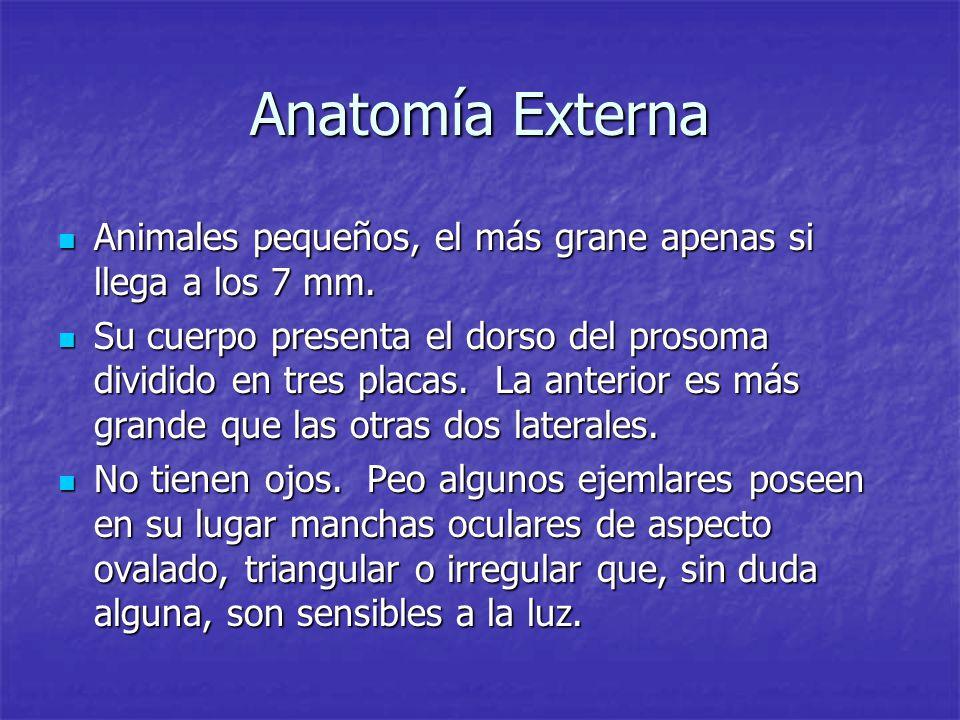 Atractivo Anatomía Interna Hembra Imágenes - Imágenes de Anatomía ...
