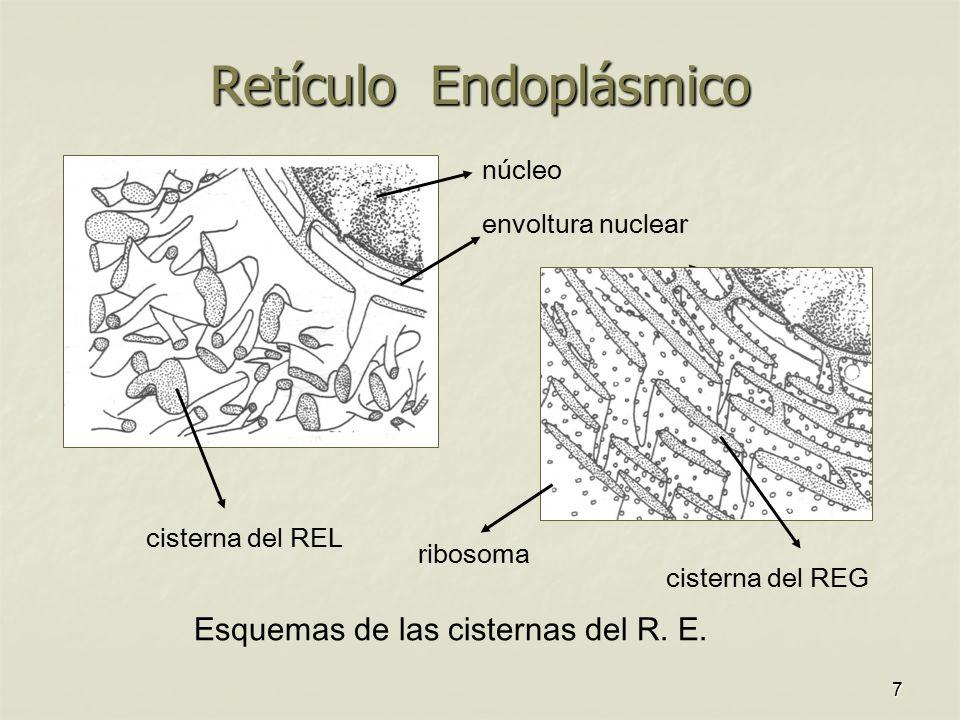 Retículo Endoplásmico
