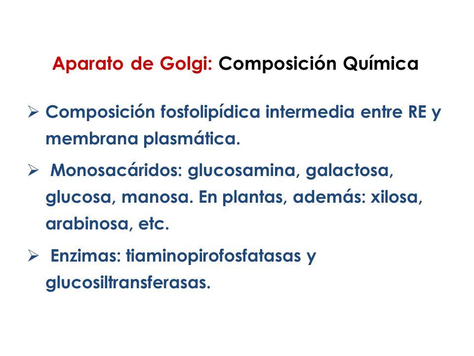 Aparato de Golgi: Composición Química