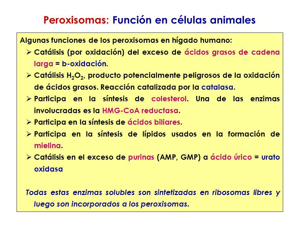 Peroxisomas: Función en células animales