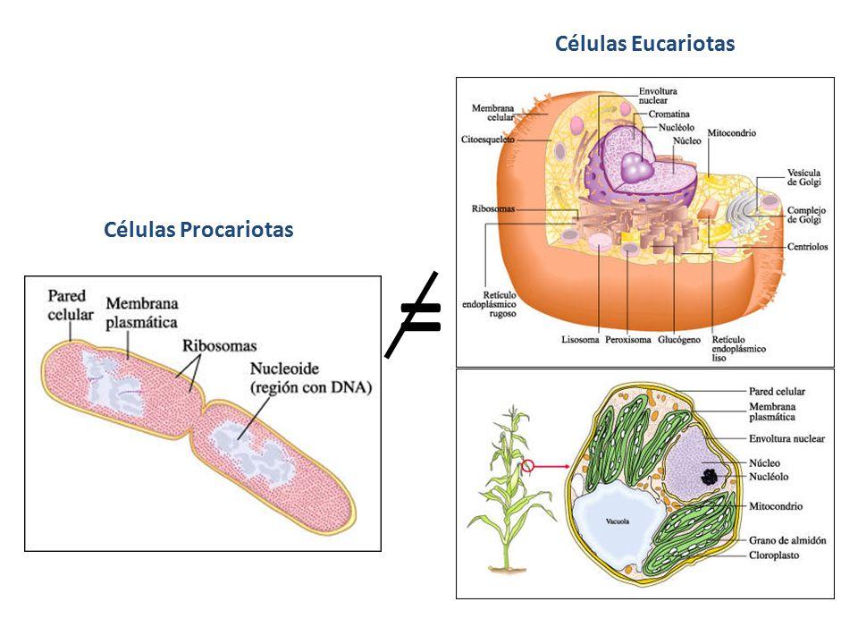 Células Eucariotas Células Procariotas =