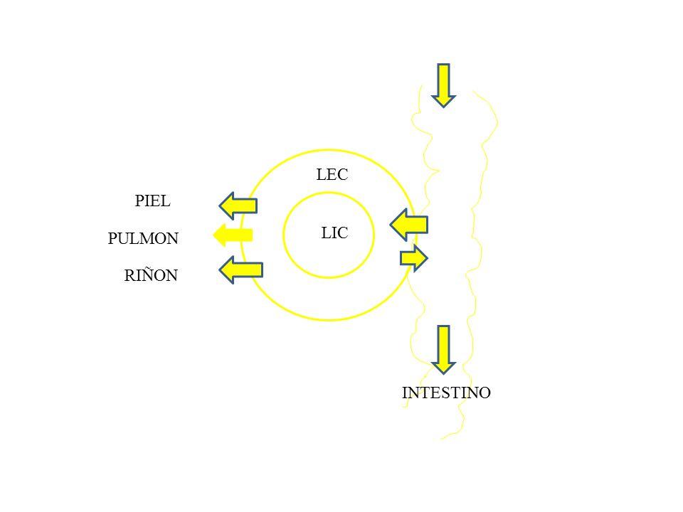 LEC PIEL LIC PULMON RIÑON INTESTINO