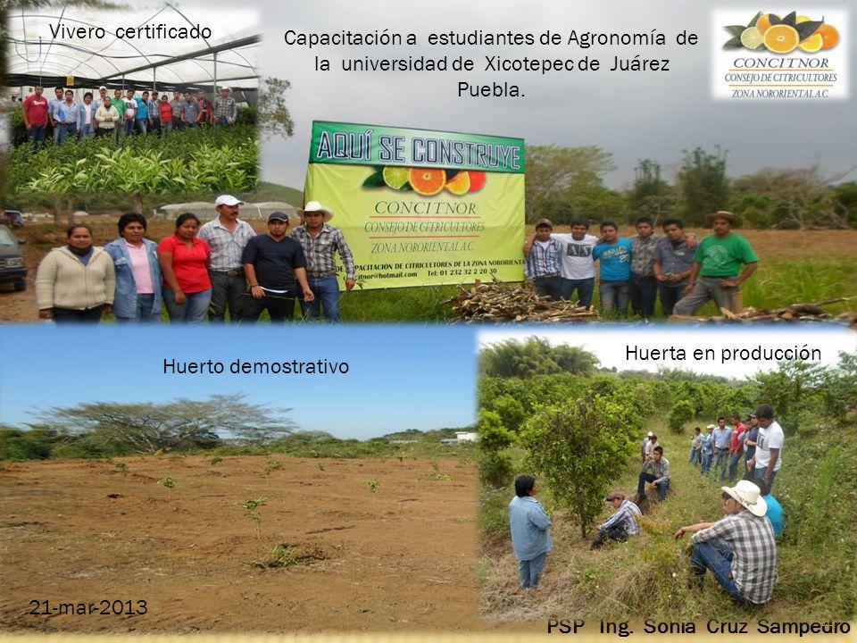 Consejo de citricultores de la zona nororiental a c ppt for Vivero agronomia