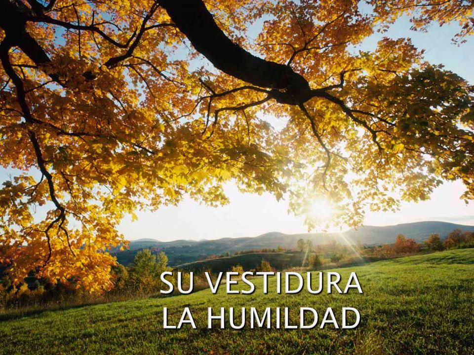 SU VESTIDURA LA HUMILDAD