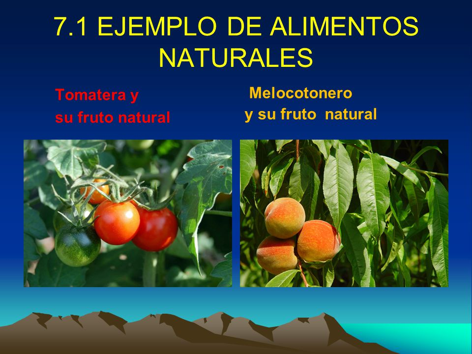 Tecnologia de los alimentos ppt video online descargar - Alimentos adelgazantes naturales ...