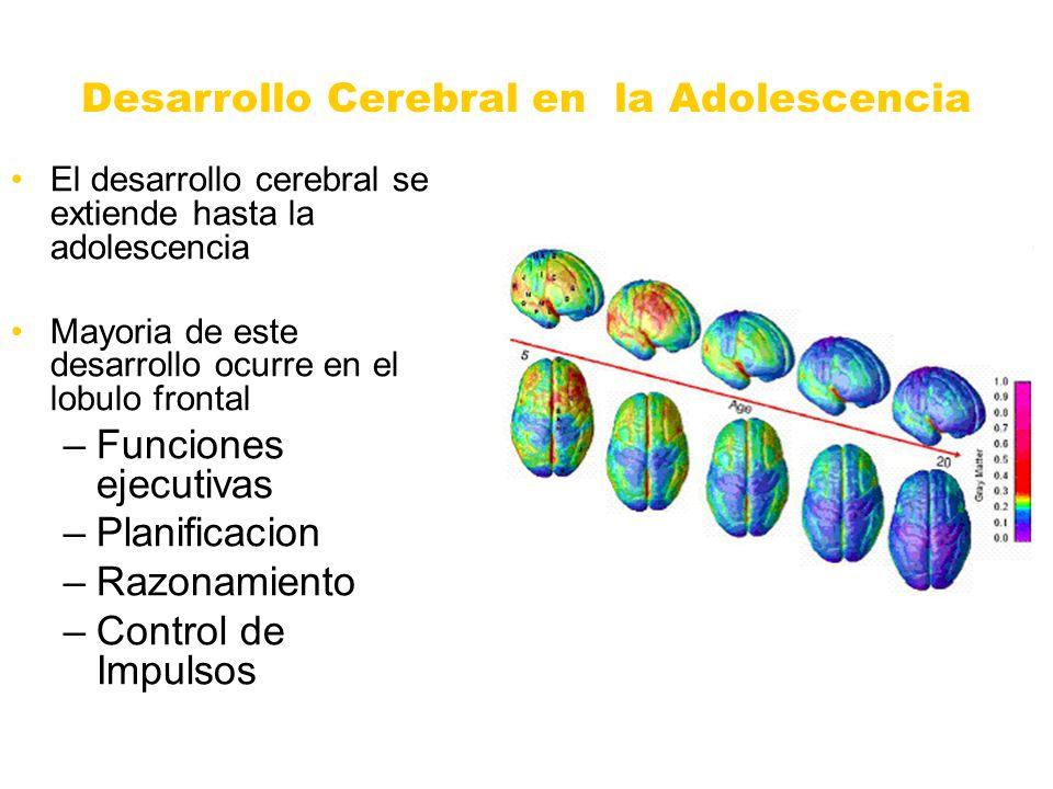 Desarrollo Cerebral en la Adolescencia