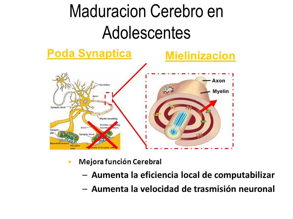 Maduracion Cerebro en Adolescentes