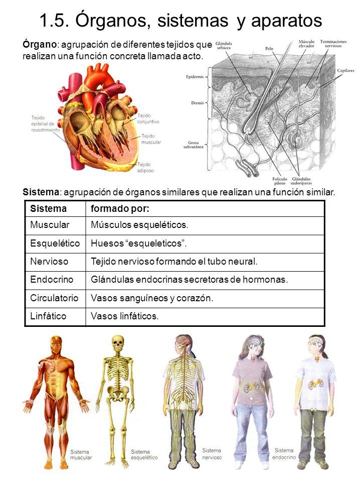 1.5. Órganos, sistemas y aparatos
