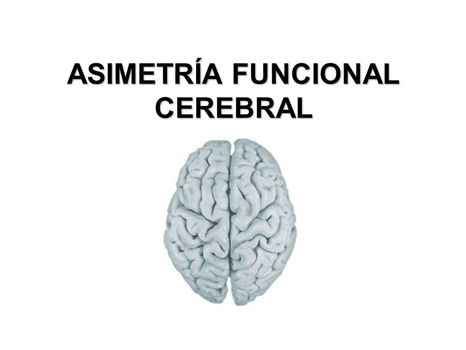 ASIMETRÍA FUNCIONAL CEREBRAL - ppt video online descargar