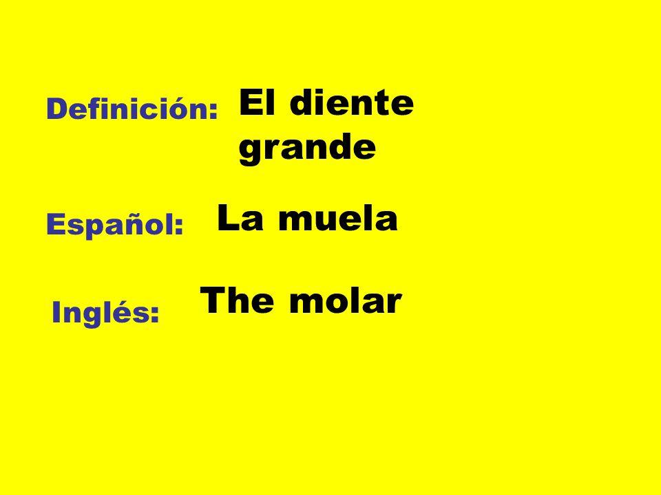 El diente grande Definición: La muela Español: The molar Inglés: