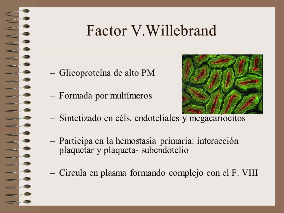 Factor V.Willebrand Glicoproteína de alto PM Formada por multímeros