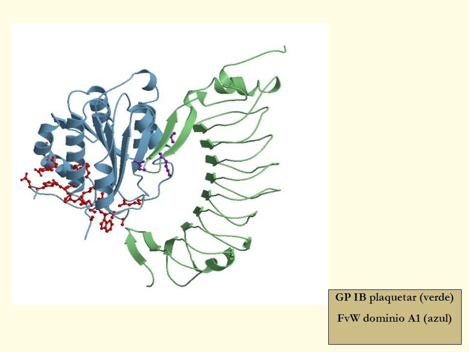 GP IB plaquetar (verde)