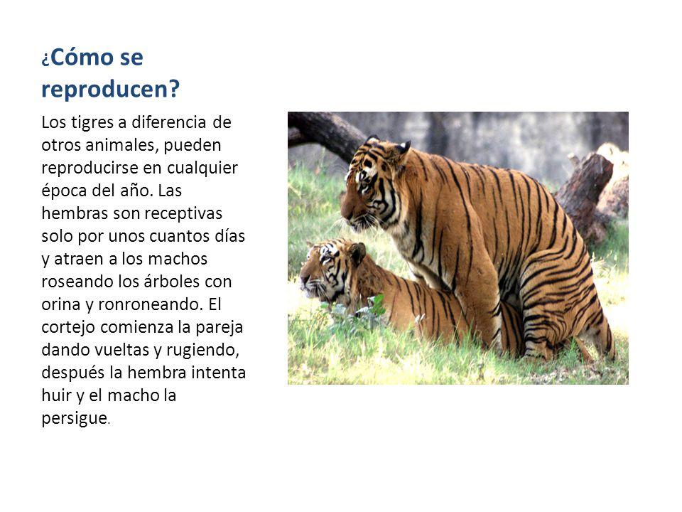 Santiago jaramillo hincapi ppt video online descargar - Como se aparean los elefantes ...