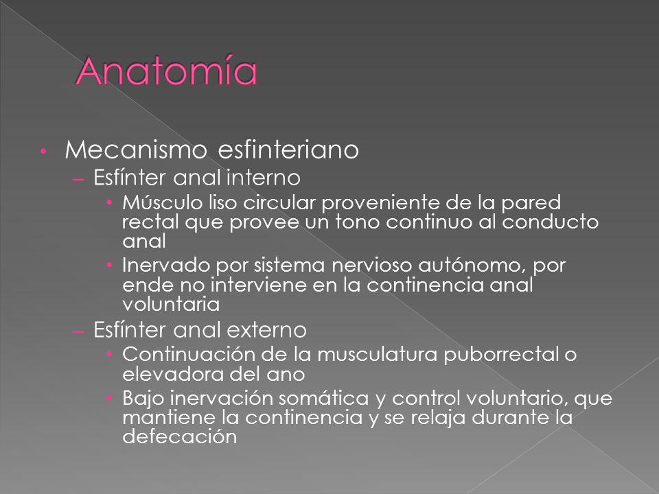 Moderno Anales De La Anatomía Fotos - Anatomía de Las Imágenesdel ...