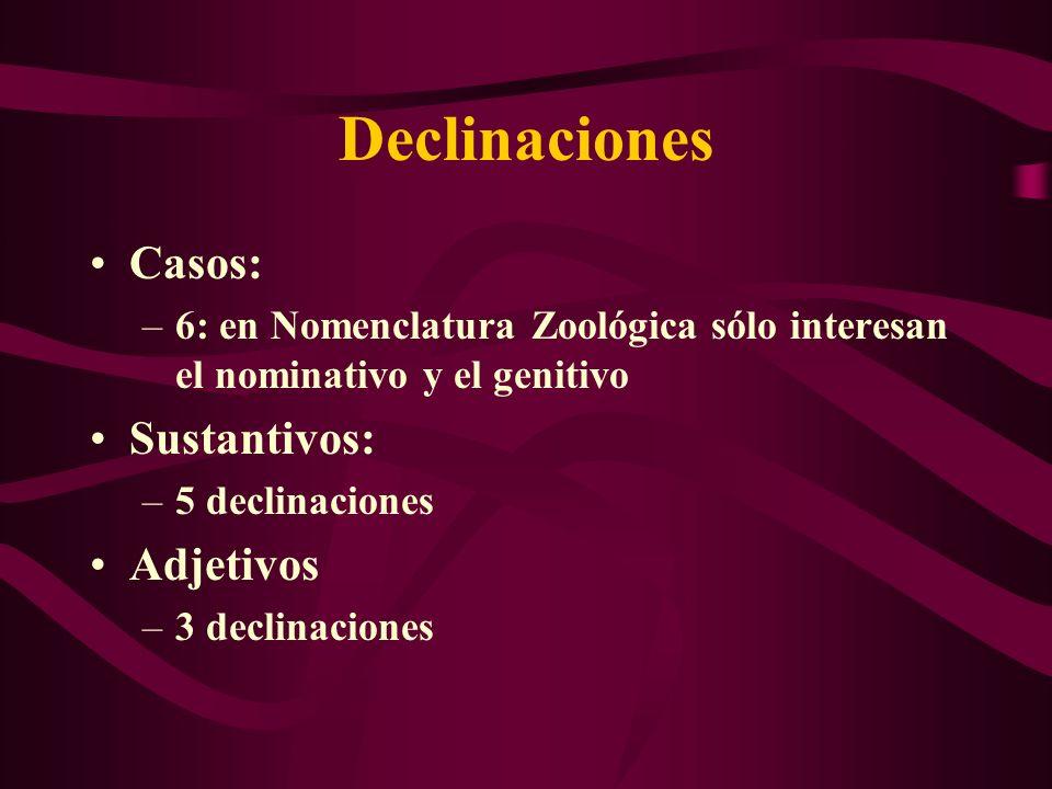 Declinaciones Casos: Sustantivos: Adjetivos