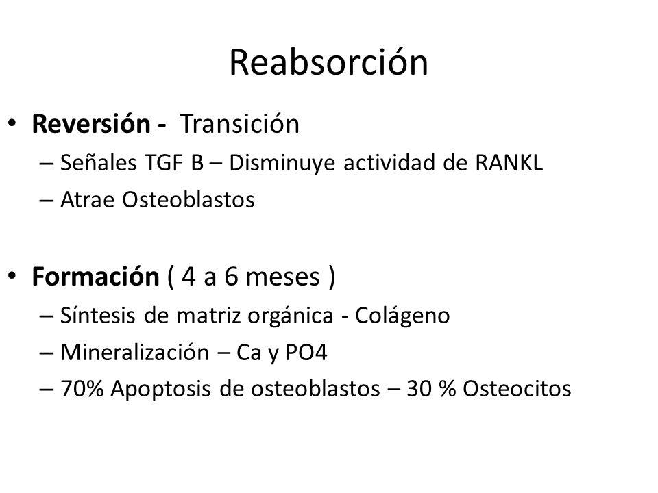 Reabsorción Reversión - Transición Formación ( 4 a 6 meses )