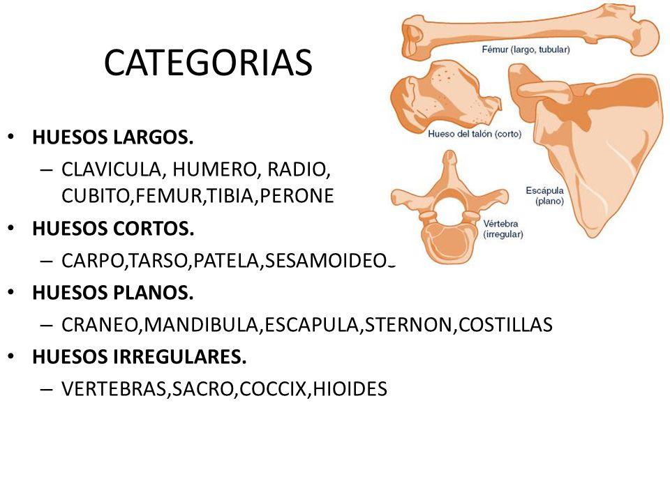 CATEGORIAS HUESOS LARGOS.