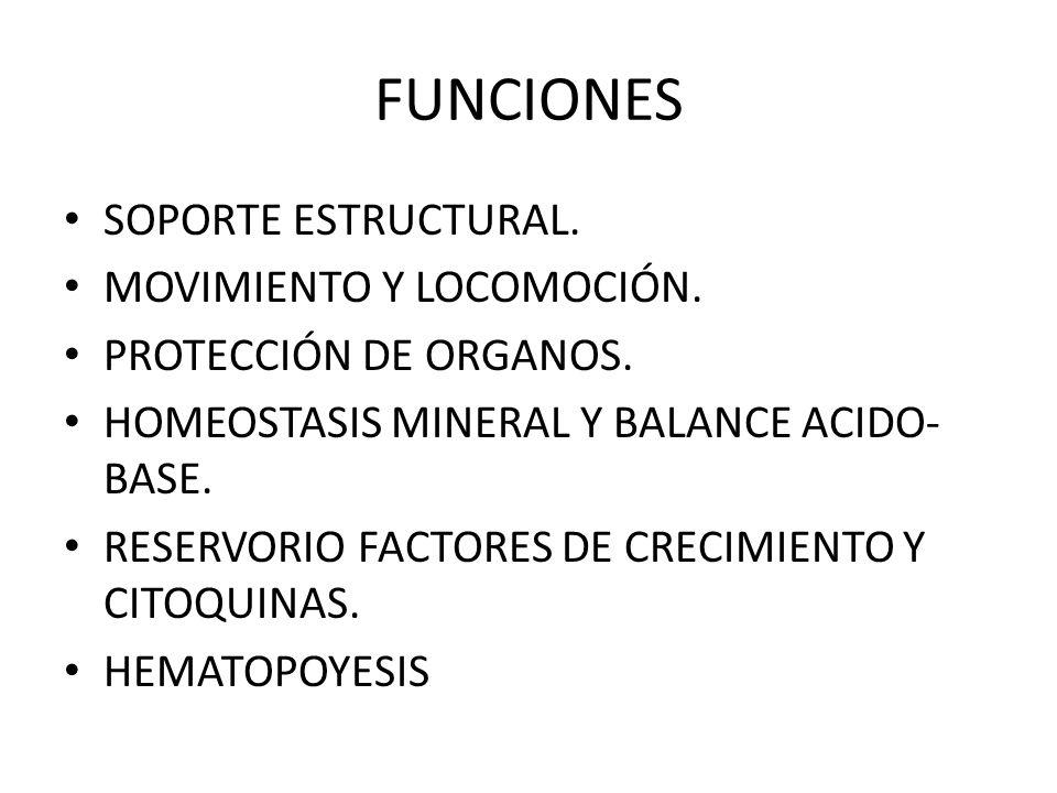 FUNCIONES SOPORTE ESTRUCTURAL. MOVIMIENTO Y LOCOMOCIÓN.