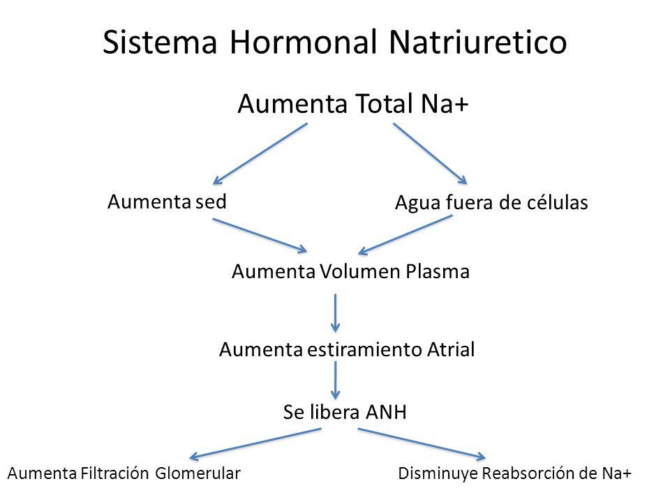 Sistema Hormonal Natriuretico