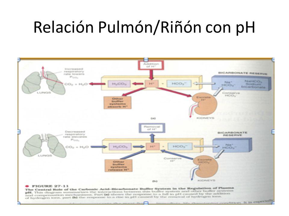 Relación Pulmón/Riñón con pH