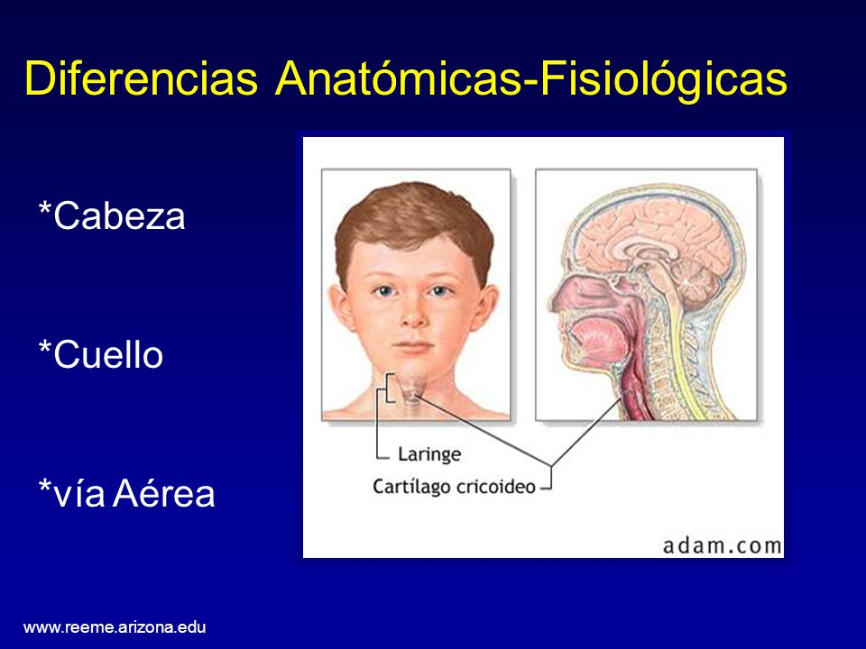 Moderno Anatomía Y Fisiología Diferencia Molde - Anatomía de Las ...