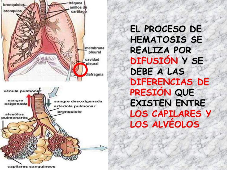 Bonito La Imagen De Los Alvéolos Motivo - Anatomía de Las ...