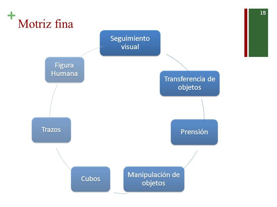 Motriz fina Seguimiento visual Figura Humana Transferencia de objetos