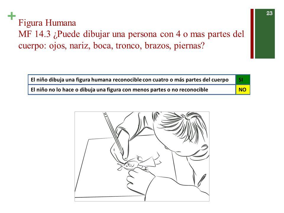 Figura Humana MF 14.3 ¿Puede dibujar una persona con 4 o mas partes del cuerpo: ojos, nariz, boca, tronco, brazos, piernas