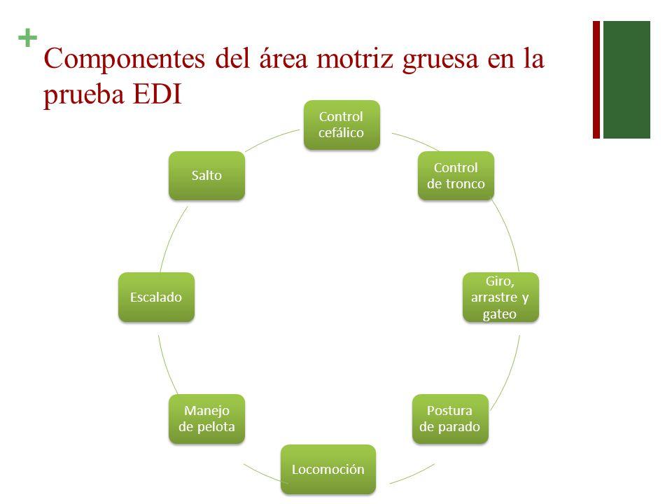Componentes del área motriz gruesa en la prueba EDI