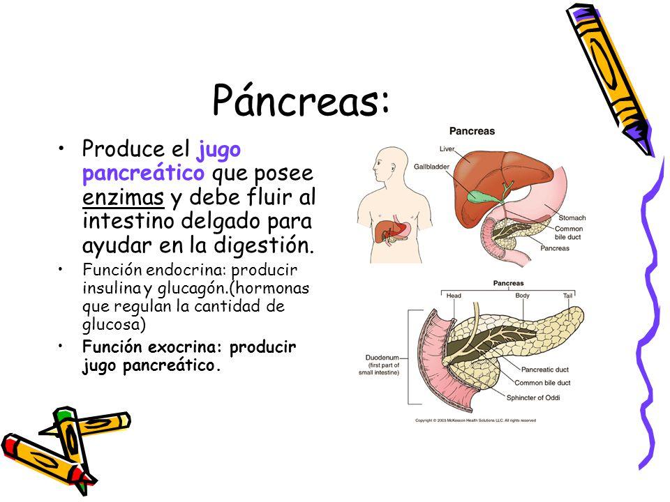 Sistema digestivo Colegio Santa Sabina Sexto año básico