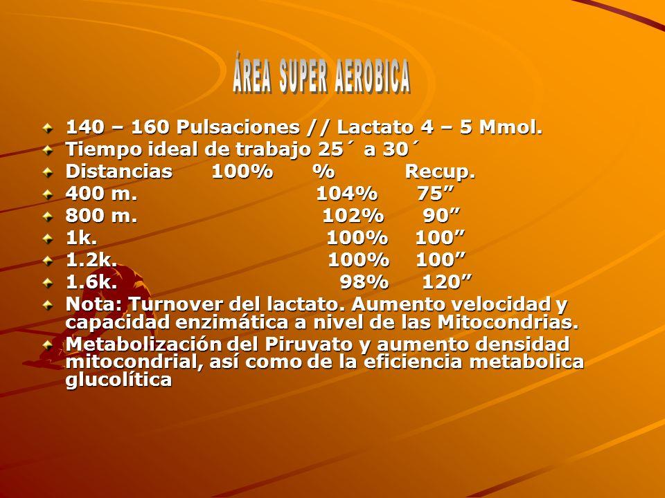 140 – 160 Pulsaciones // Lactato 4 – 5 Mmol.