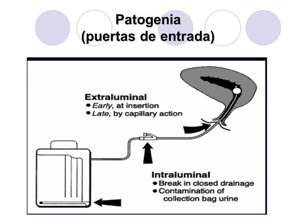 Patogenia (puertas de entrada)
